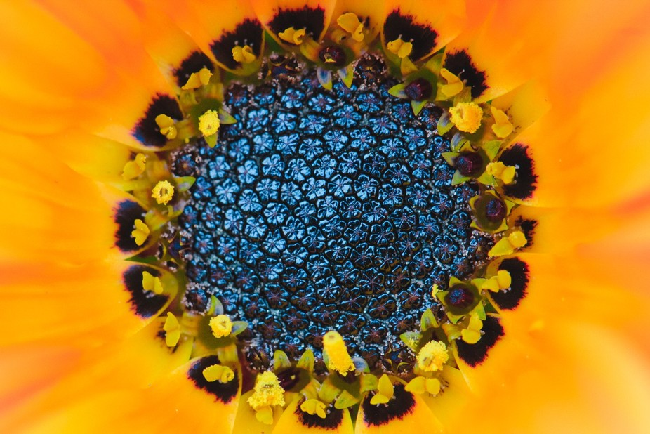 A macro shot of the inside of a flower. Its like a whole little universe on its own.