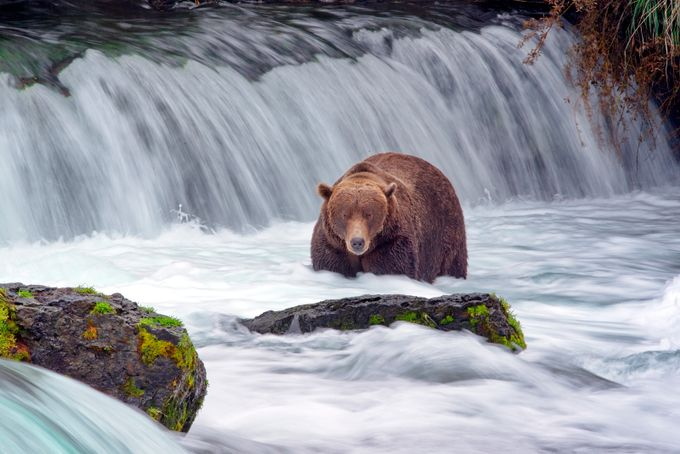 Brooks Falls AK 2 by RobWaples - Bears Photo Contest