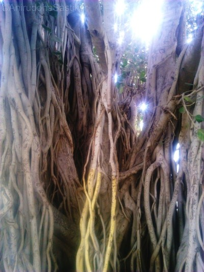 Entangled Roots