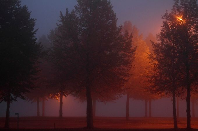 Trees by elisaputti - Covers Photo Contest Vol 42
