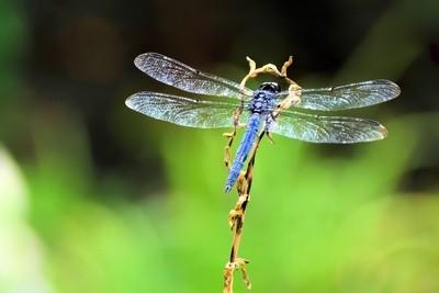Crystal Wings