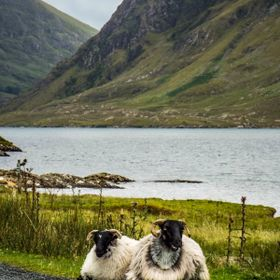 A pair of sheep in the scenic Doo Lough Valley, Ireland