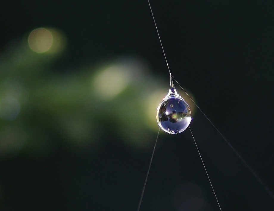 This blob of water remained stuck to spider's threads after the rain had been and gone. ...