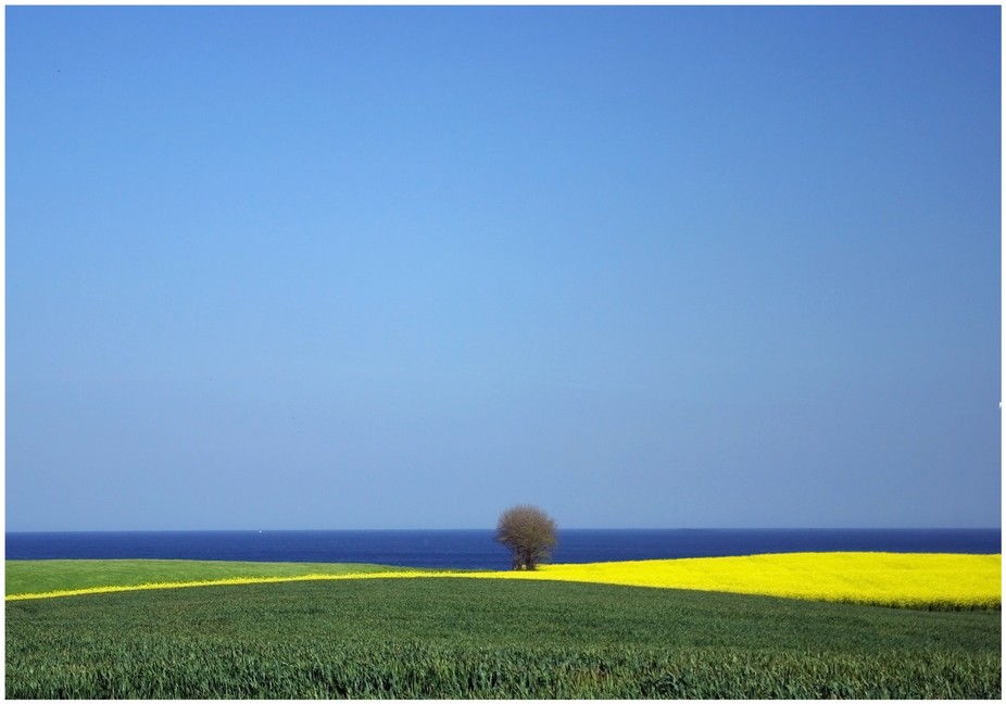 lonely tree at the baltic sea
