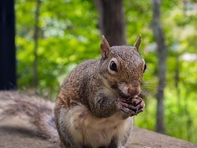 Squirrel Hands