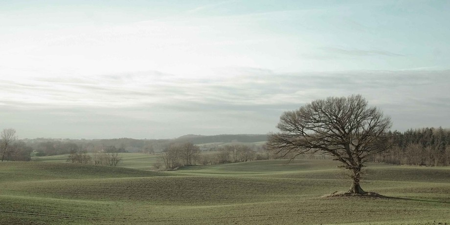 lonesome tree in Northern Germany