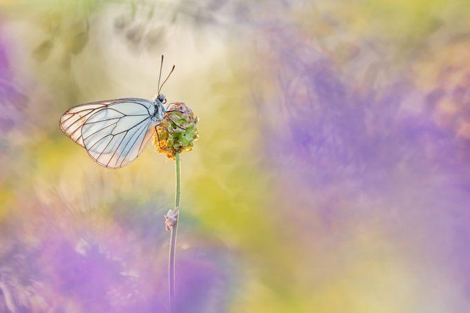 ~ Paper Kite ~ by HenrikSpranz - Monthly Pro Vol 37 Photo Contest