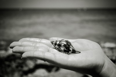 From Sea to Shelling Sea