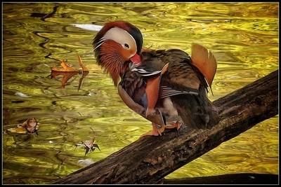 Golden Beauty Bird