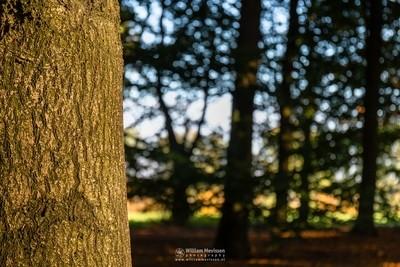Sunny Autumn Tree Trunk