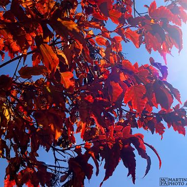 Autumn leaves contrasted against the sky, with a slight, intentional, lens-flare