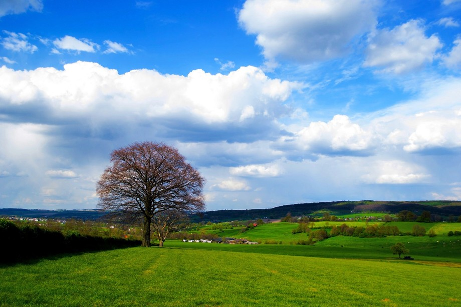 My perfect meadow is one with a beautiful tree. I encountered in only on pictures. One day I drov...