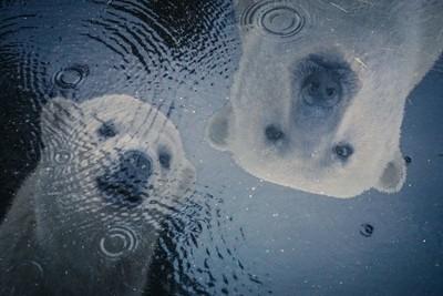Polar Puddle