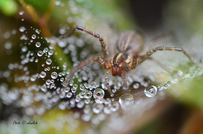Walking on Raindrops by melkav - Covers Photo Contest Vol 42