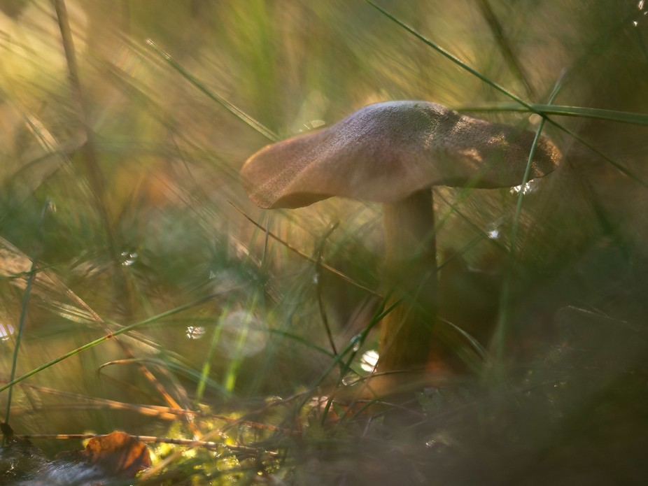 Macro shot (Olympus 60mm) taken on a fall day with great natural light.  Shot through a clump of ...