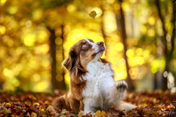 Autumn playtime by Jtrojer - Only Pets Photo Contest