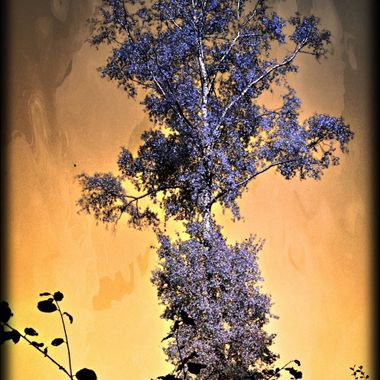 Photo of a tree manipulated.