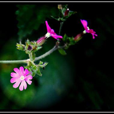 Last few flowers.