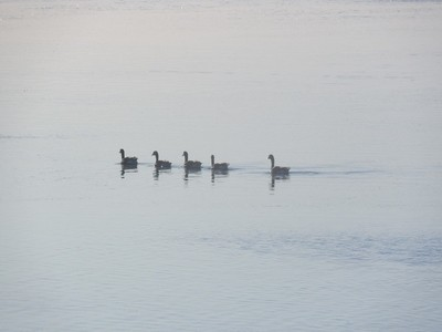 Five Geese in a row