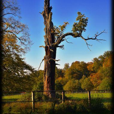 Tree coming somewhat back to life at Sababurg.
