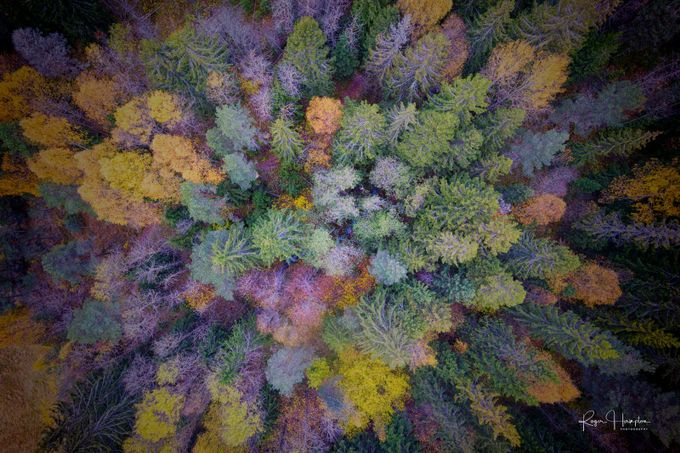 Birds-eye-autumn by rogerhampton - Epic Abstractions Photo Contest
