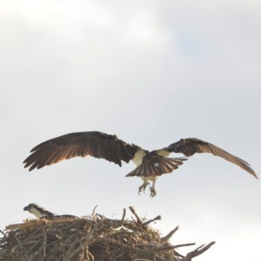 Landing on the nest