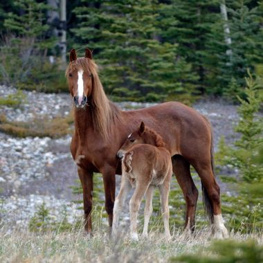 The chestnut foal was very shy