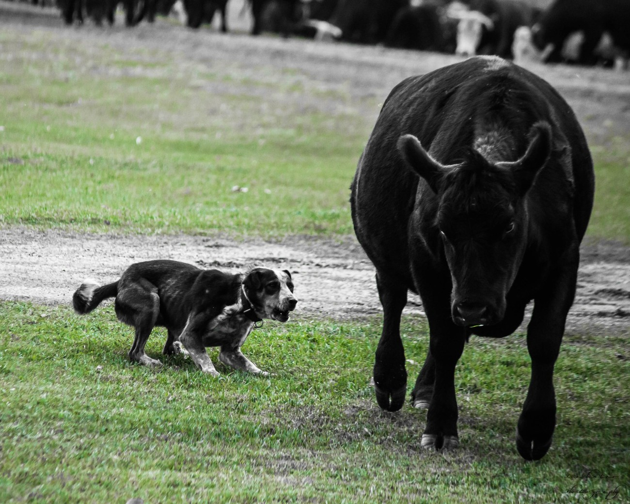 Farmers Little Helper