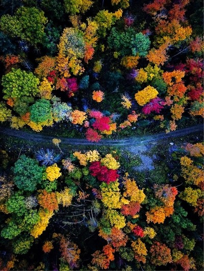Sporadic fall colors in the Ottawa Valley, Ontario, Canada