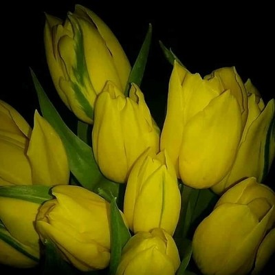 Tulips  bring the sunshine in