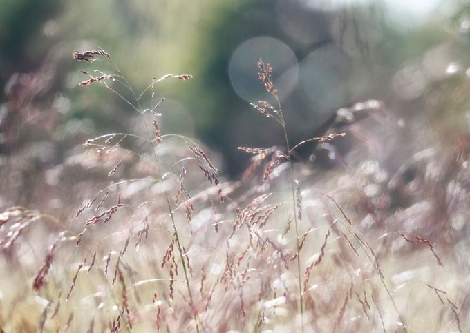 Glamour Field by TeeBrown - Everything Bokeh Photo Contest