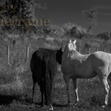 Cooler, on the left, and Grayson, on the right; two of the horses at the rescue. Just hangin' out in the pasture