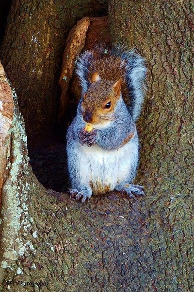 Sitting On His Tree Throne