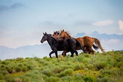 Rocky Mountian Mustangs