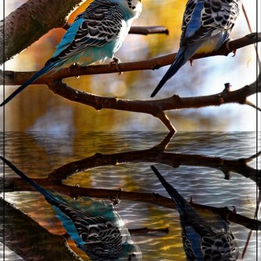 Birds and their reflections.