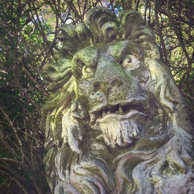 A fearsome lion statue that surprises visitors to Portmeirion .. It is partially hidden in a hedge.