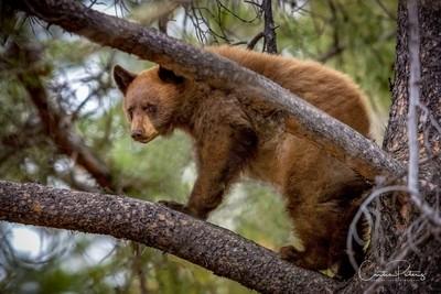 _MG_1977-Bear Cub