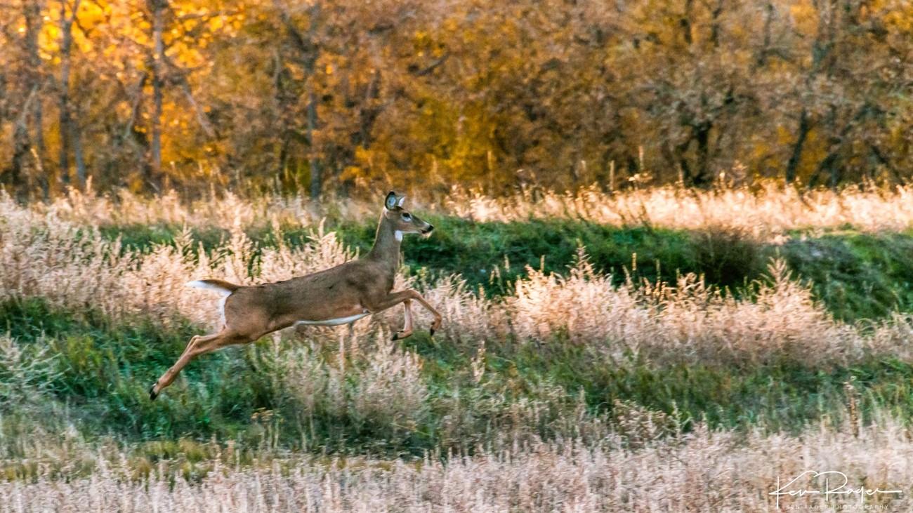 Deer Run Nature Area-2