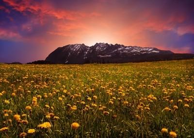 Golden Fields of Flowers