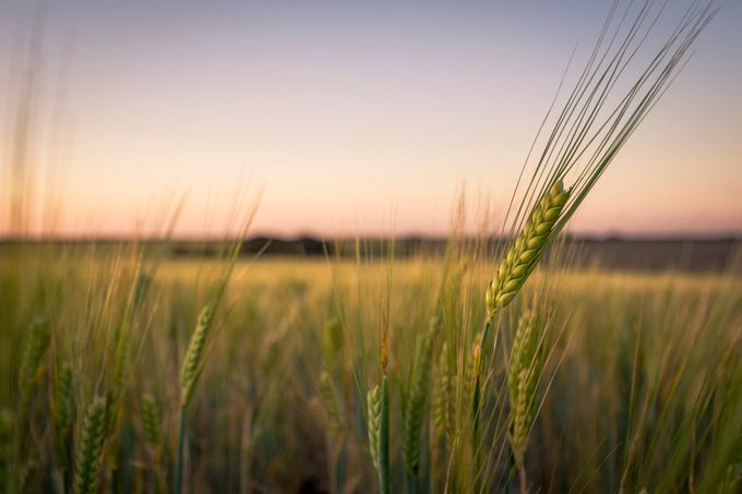 Barley by bracey - Rural Vistas Photo Contest