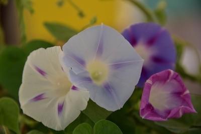 pastels of spring