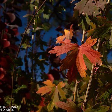 Brilliant Leaf Against Bokeh