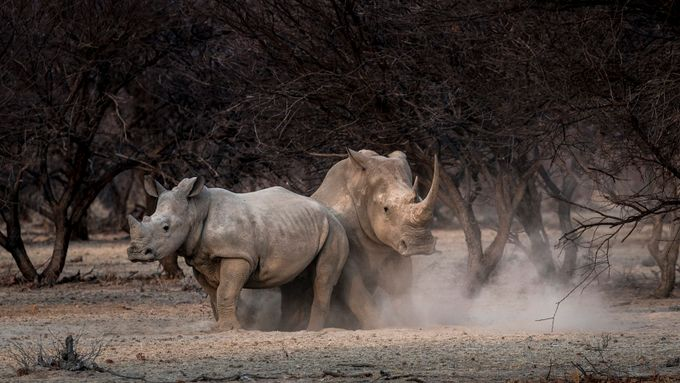 Mark Swandale_Dust bath with Mom by markswandale - Big Mammals Photo Contest
