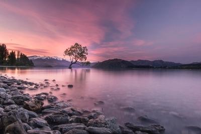 The Wanaka Tree | New Zealand