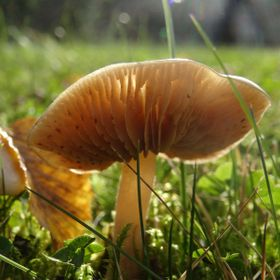 Mushroom on a sunny fall day