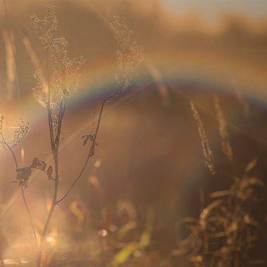Golden Rainbow
