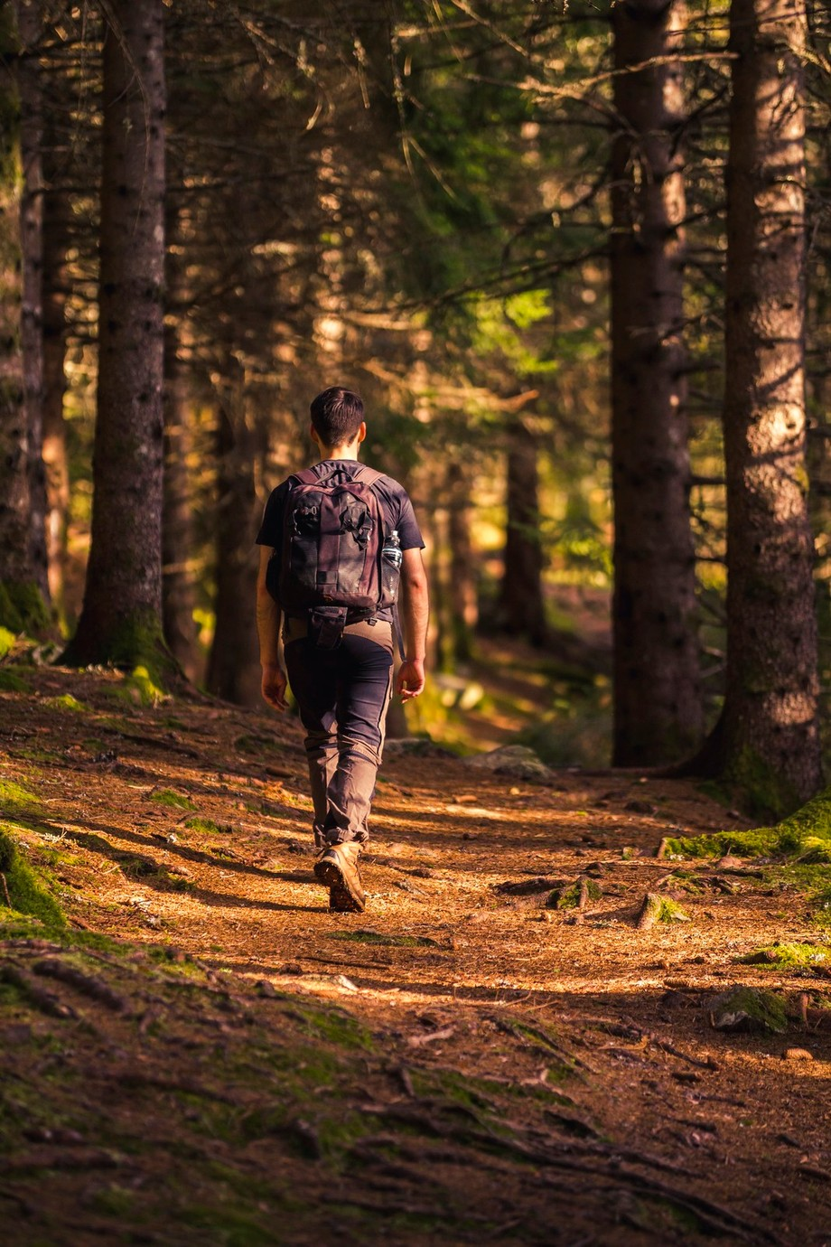 Walk in the Woods by iwangroot - Paths And Trails Photo Contest