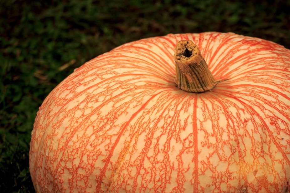 pumpkin lace