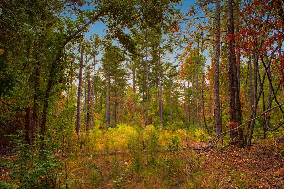 Photo taken in FDR State Park, located near Pine Mountain, Georgia.