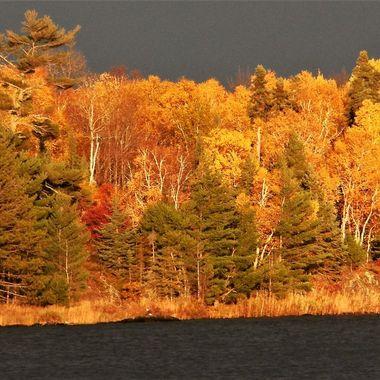 Rainy Lake with eagle. Nikon Coolpix 6500